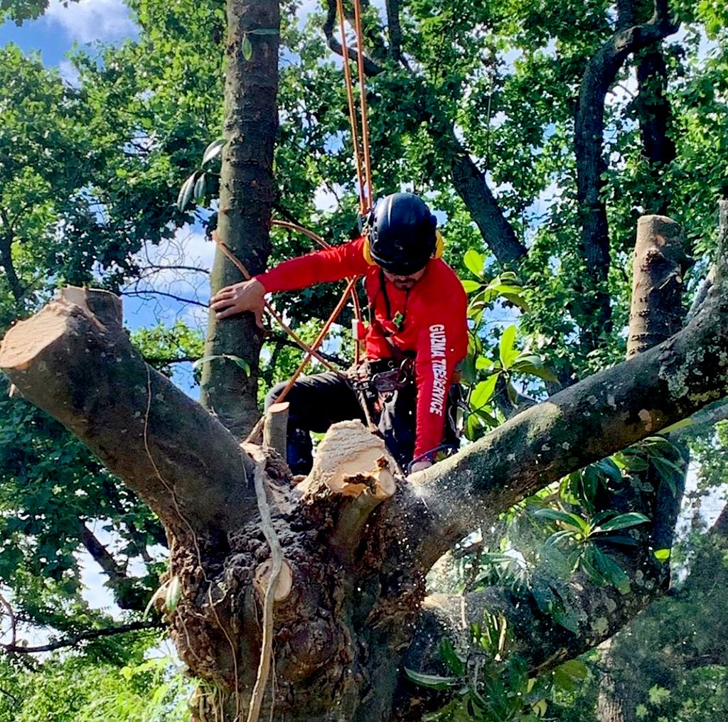 Guzman Brothers Tree Services, LLC
