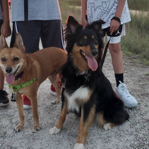 Raising and Training the kind of dogs your whole family can enjoy!