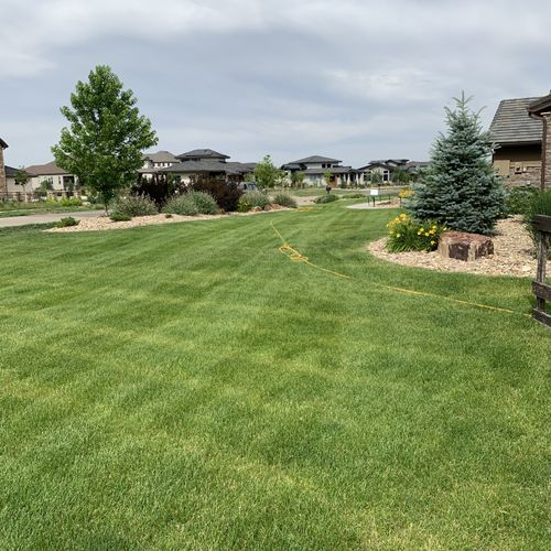 A lawn maintained with seasonal compost tea sprays