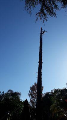 Avatar for Salazar's tree service