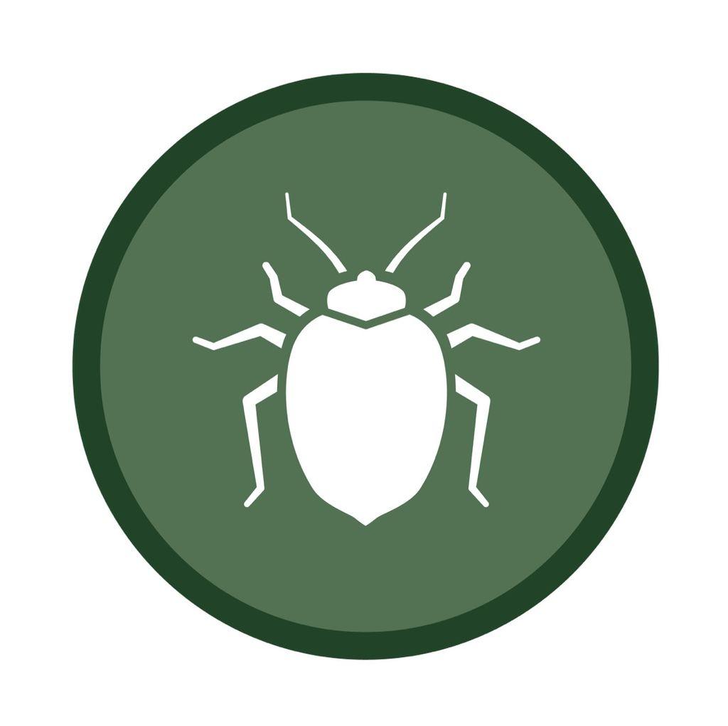 Extreme bedbug extermination