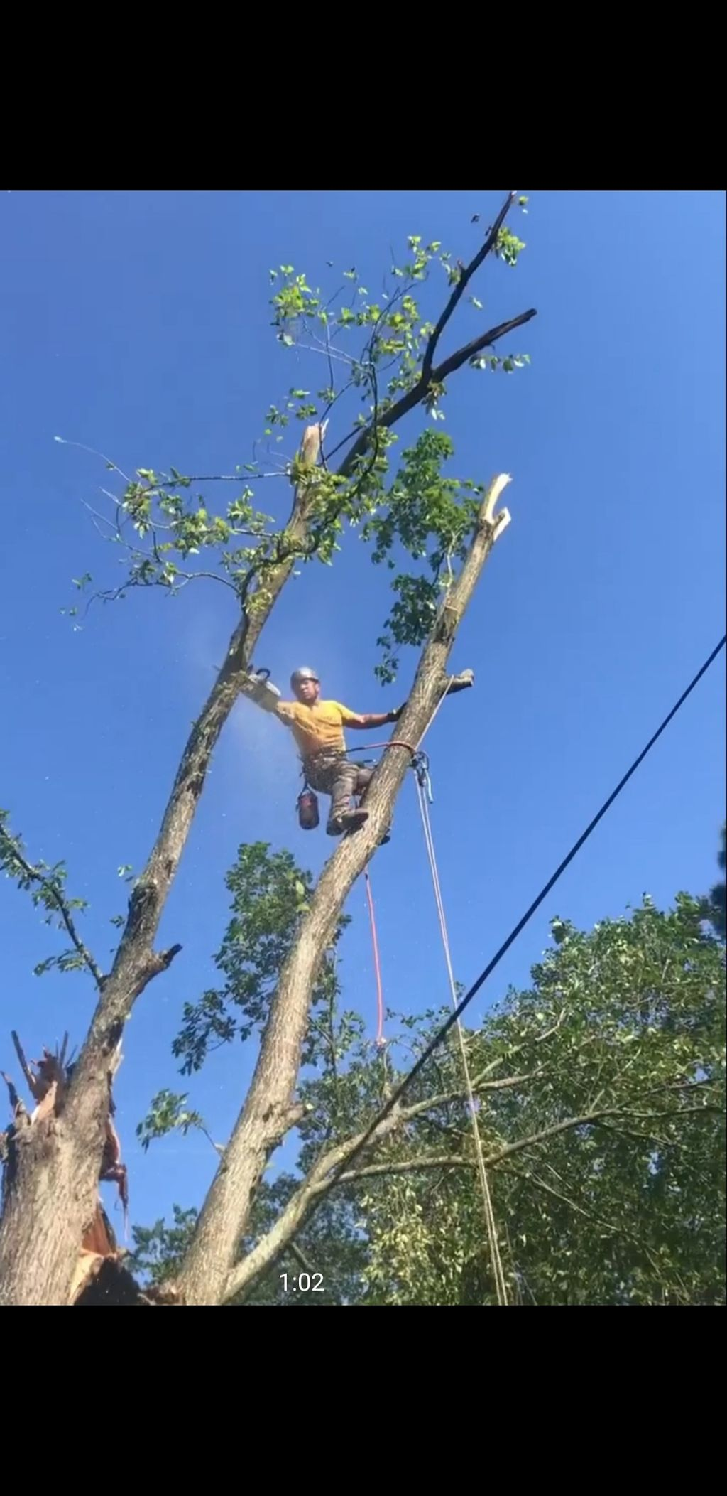 2 vets tree service