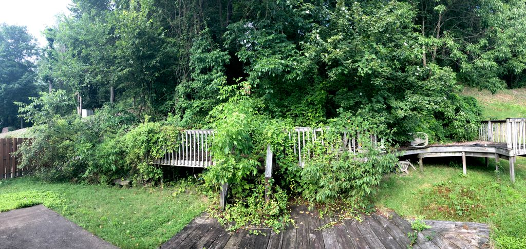 Large shrub removal and hillside clearing