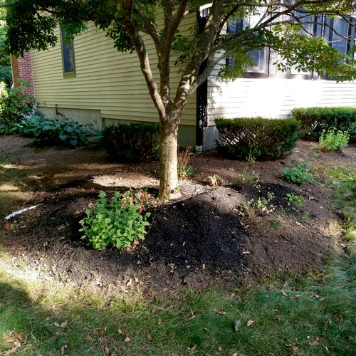 freshly weeded, ready for mulch. unedged