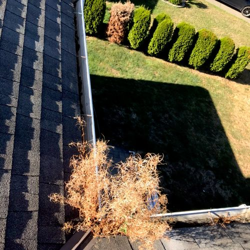 You need gutter cleaning lm happy to help you
