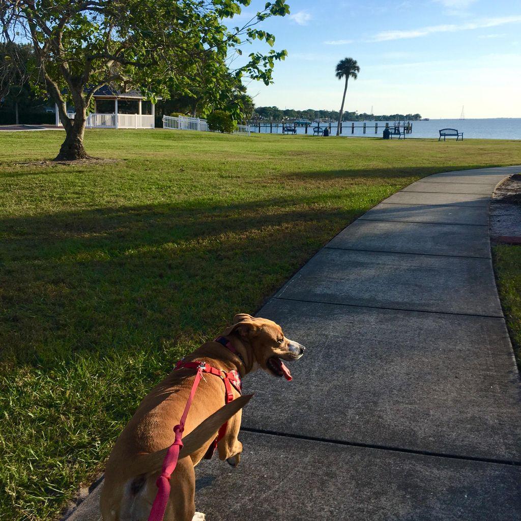 Laura's Dog Walking & Pet Sitting