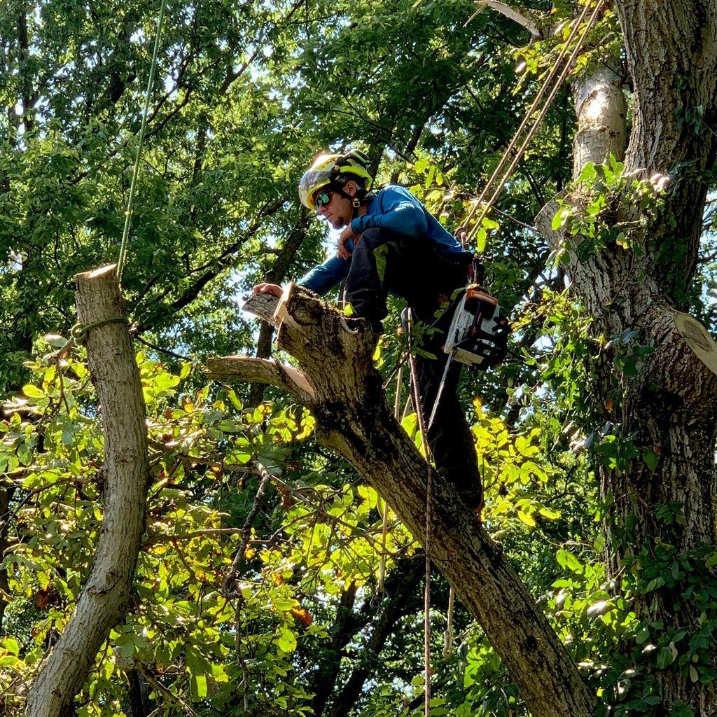 Watts Tree Experts
