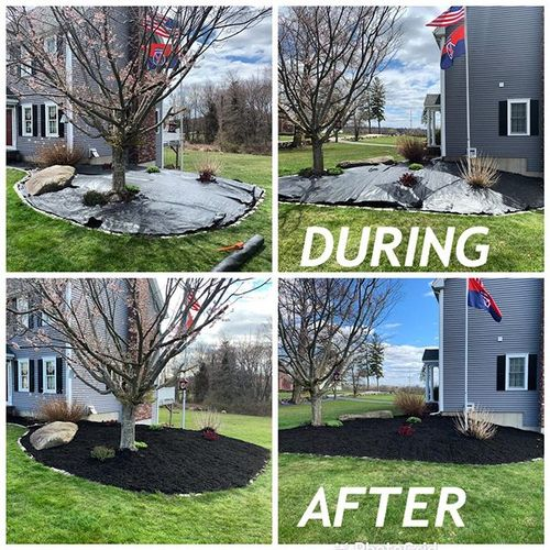Mulching with landscape fabric