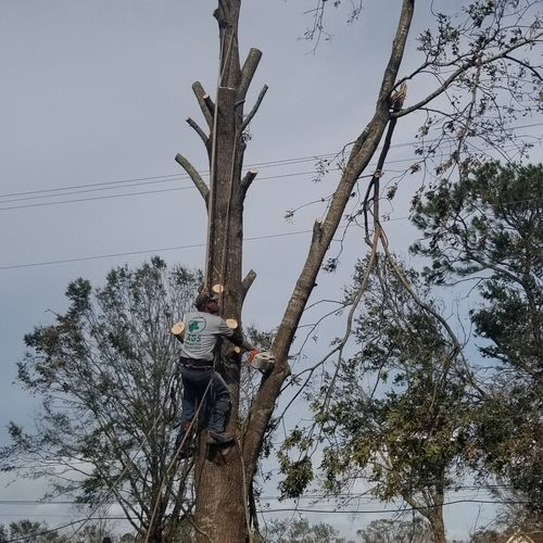 cutting down a damaged tree due to the Hurricane Laura in Lake Charles Louisiana