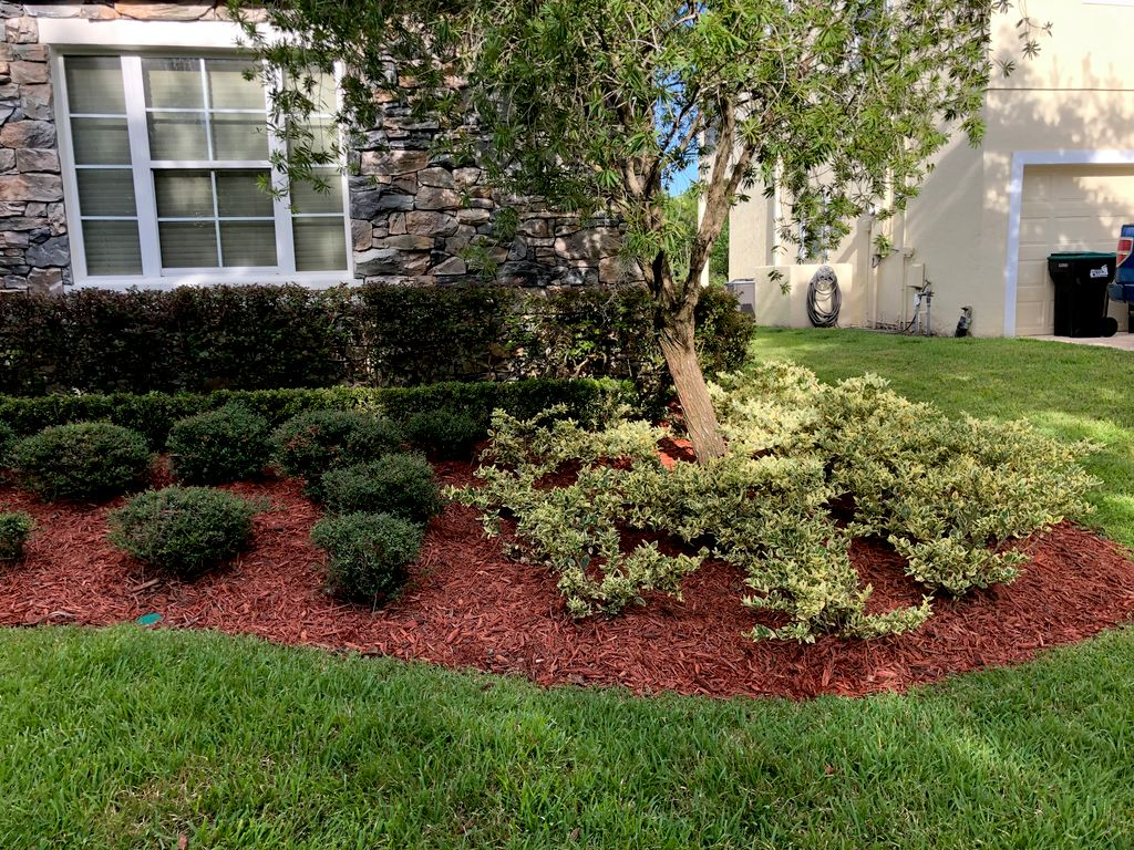 Mulch Install and Hedges shaped