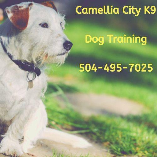 Camellia City K9
