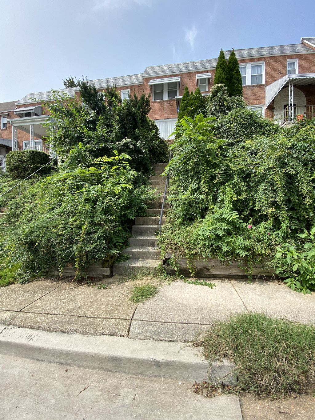 Shrubs and weeds removal