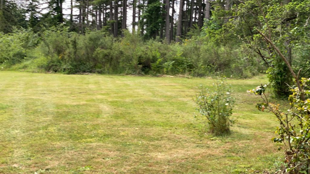 Clearing and mulching of blackberry bushes, trees, stumps, brush