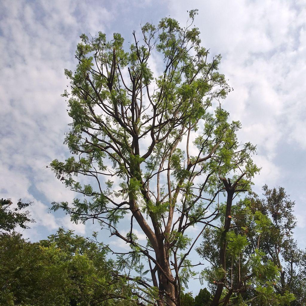 Quinones tree service
