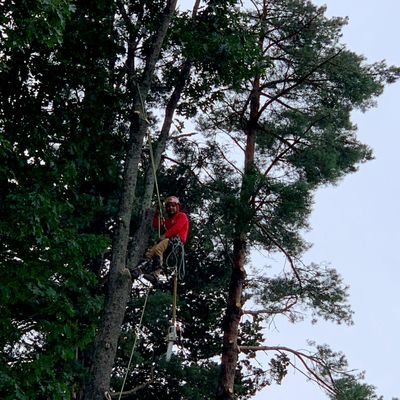 Avatar for MM tree services