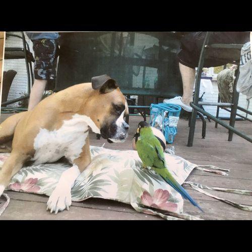 My Boxer Baxter and my Bird Rocco were best friends!