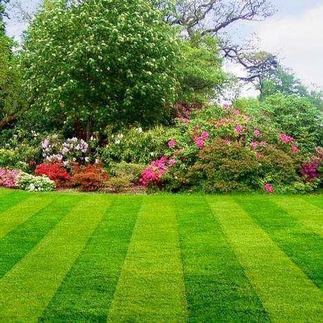 BB Lawns