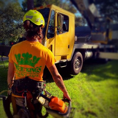 Avatar for Tree Kings Florida
