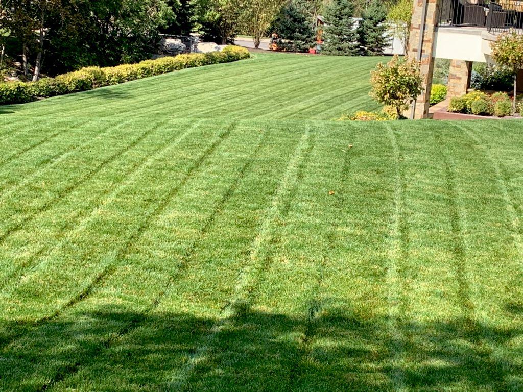 FRE$H CUTT  Lawn Maintenance