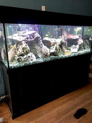 Avatar for TreasureChest Aquarium