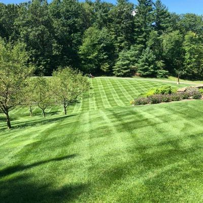 Avatar for Yard Doctor Professional Lawns Management