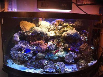 Avatar for Gavin's Aquariums