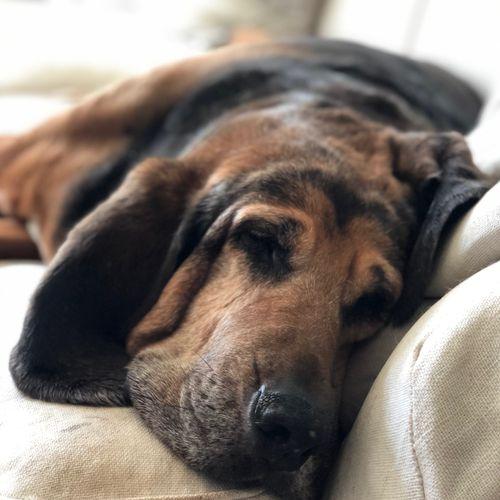 Dozer taking his nap