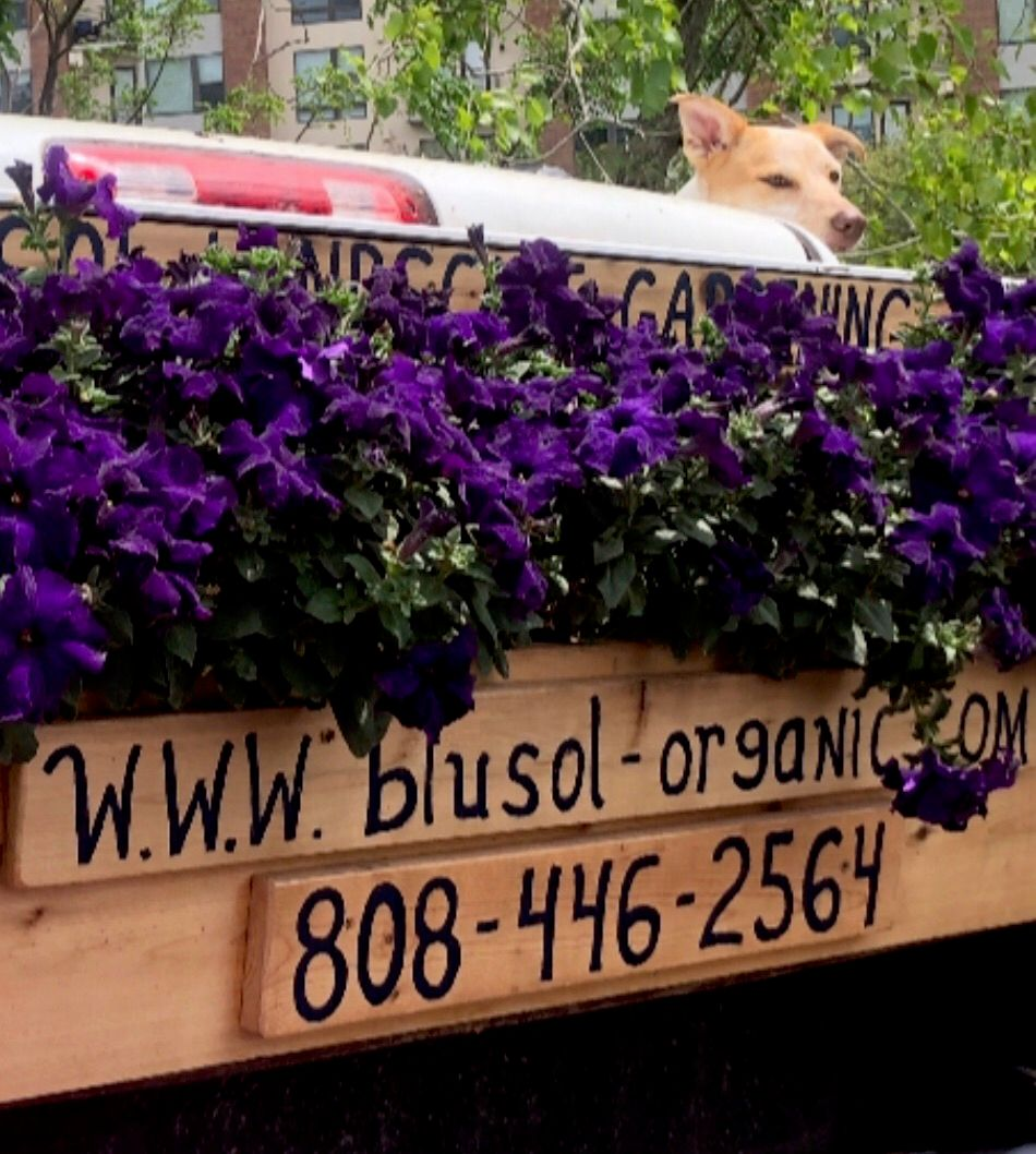 Blu Sol Organic 🌺