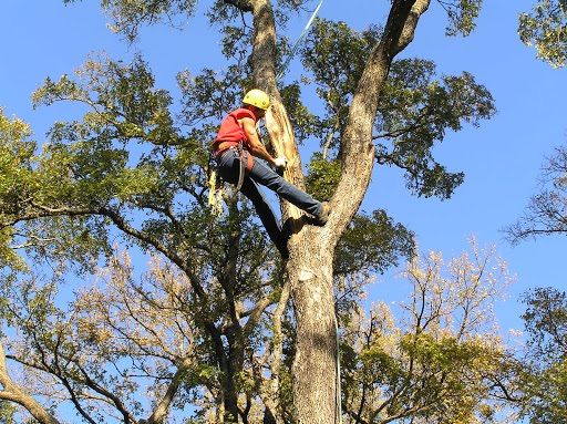 Green Earth Tree Care