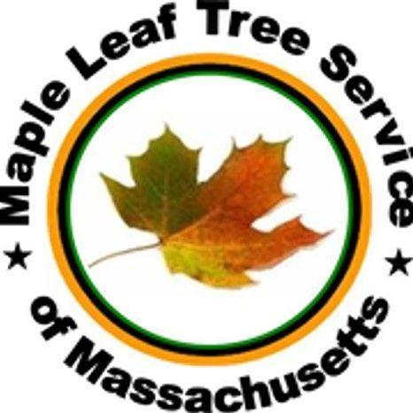 Maple Leaf Tree Service of MA