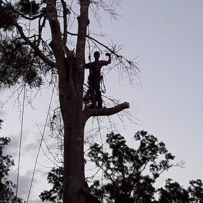 Avatar for Big John's Tree Service