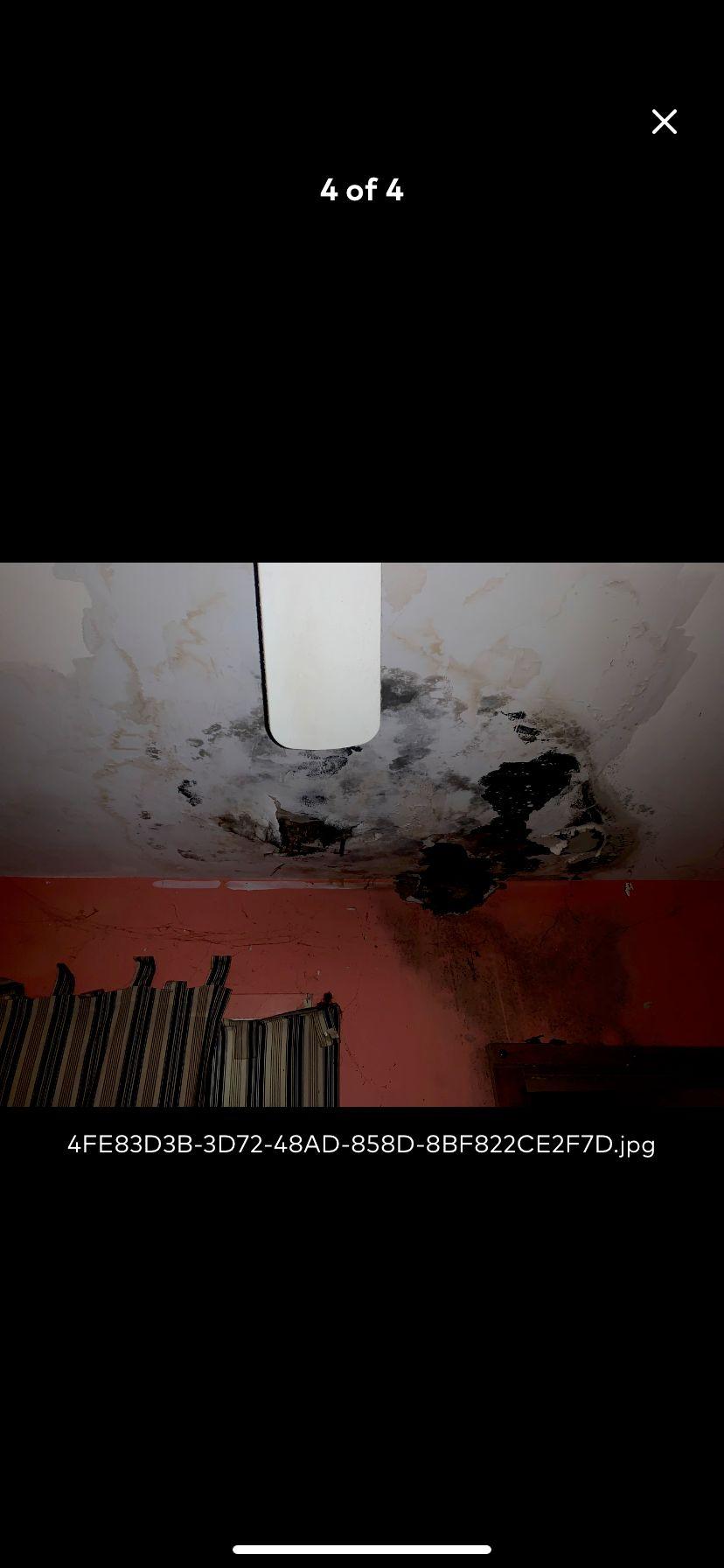 Drywall Repair and Mold Treatment