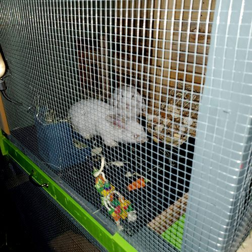 bunnies first night in their new home!