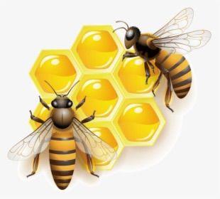 Avatar for Honey Appliance Repair
