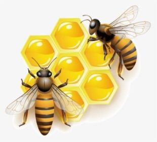 Honey Appliance Repair