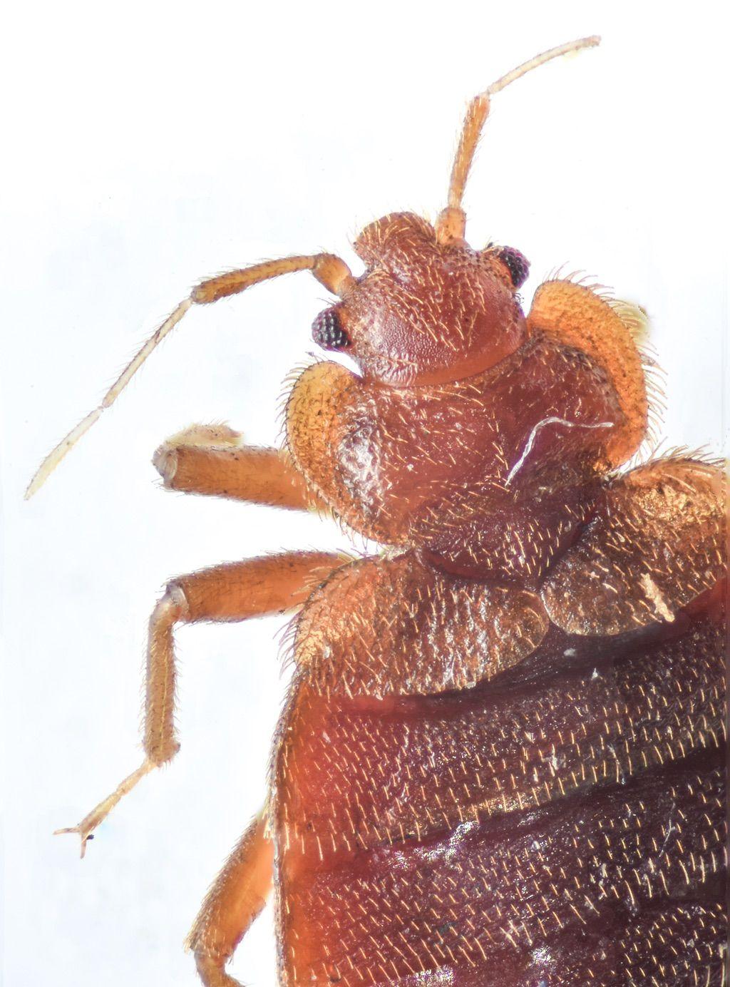 Northwest Bedbug Company
