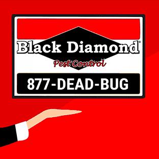 Avatar for Black Diamond Pest Control - Nashville