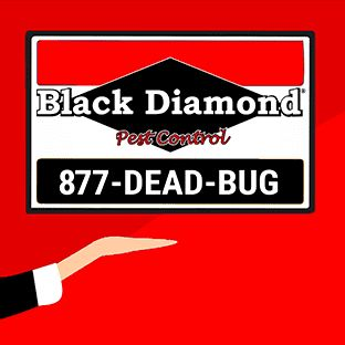 Black Diamond Pest Control - Nashville
