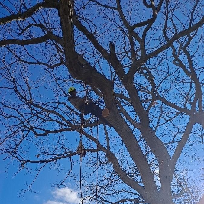 Squirrel's Tree Service LLC