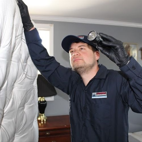 Bed bug inspections and treatment