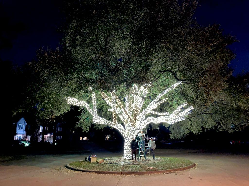 Neighborhood Tree on Forest Hills