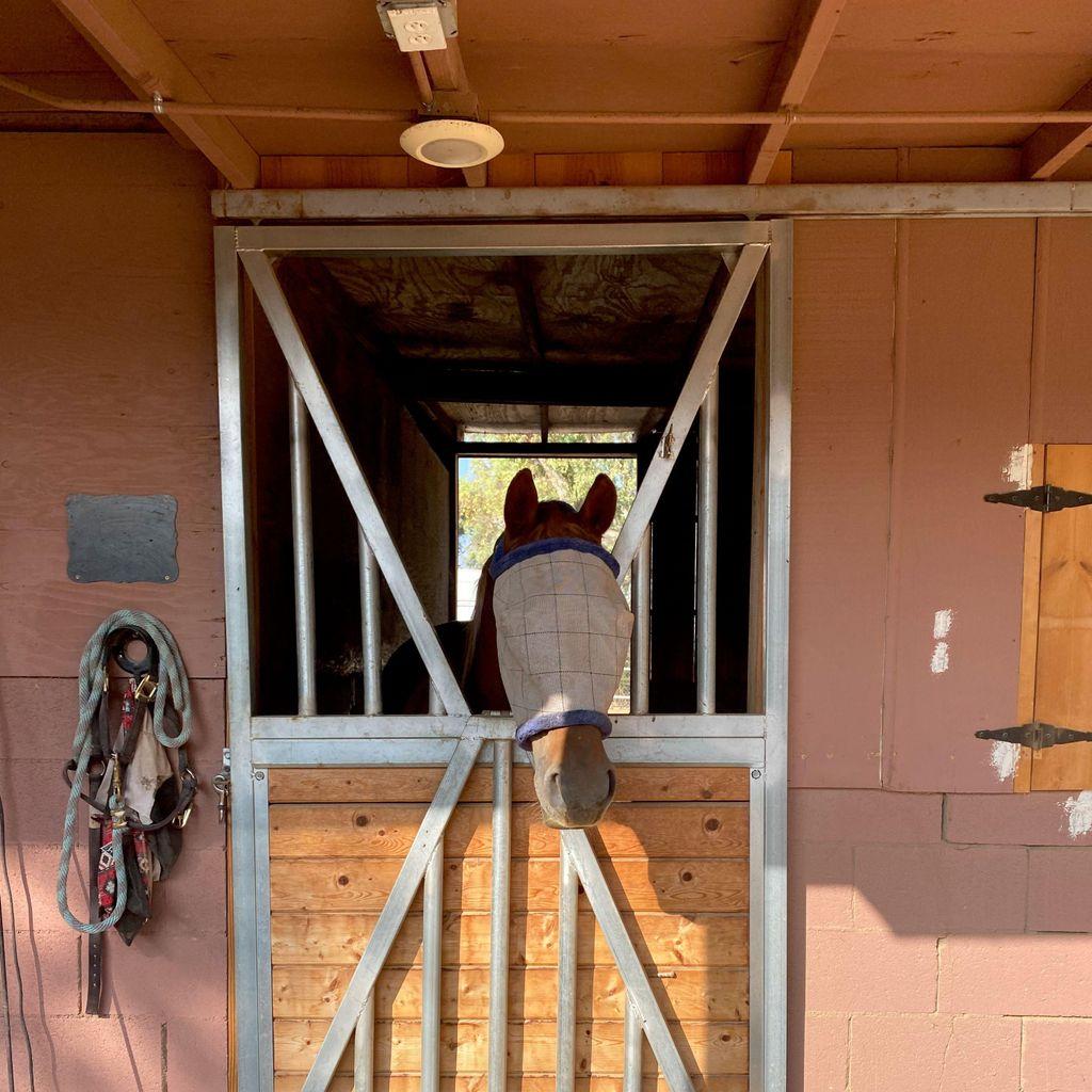 The Golden Horse Ranch