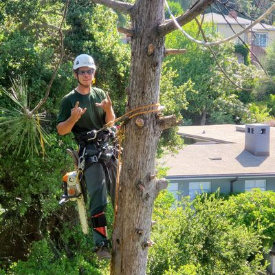 Avatar for GL tree care services