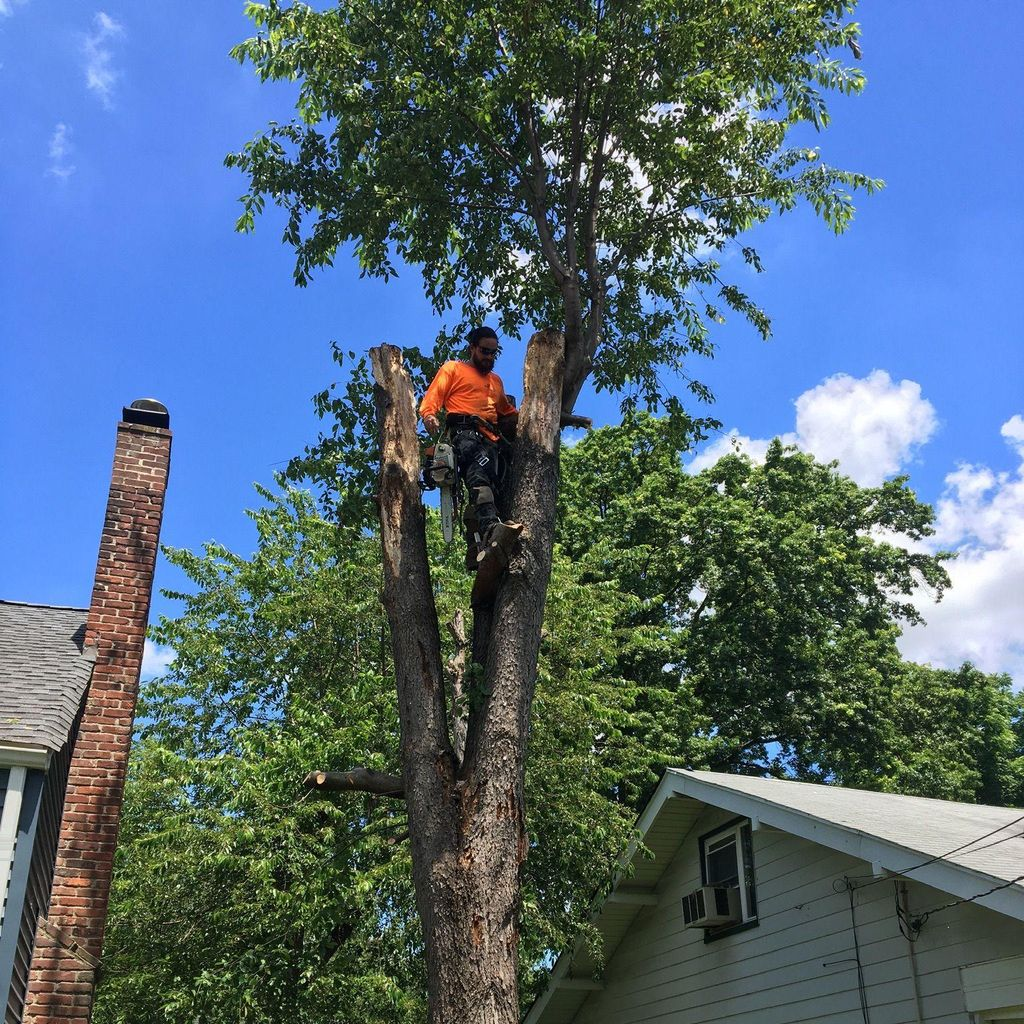 Dani Landscaping Corp. and Tree Service