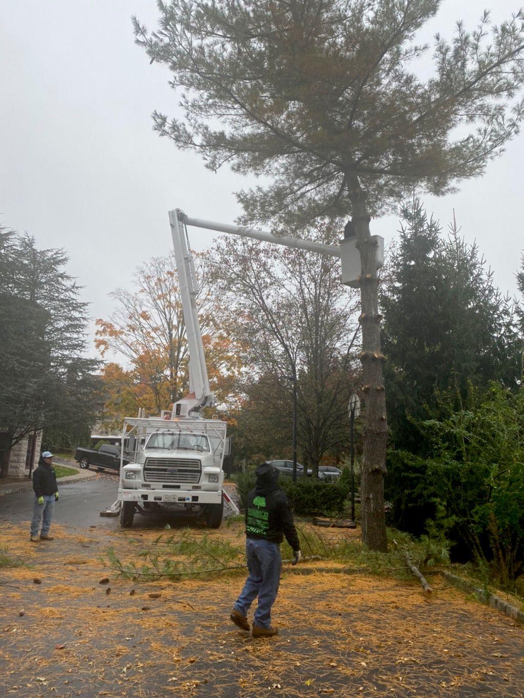 Mauricio's Tree Service