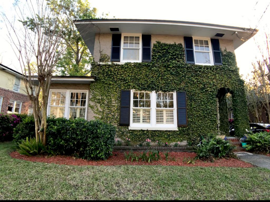 Ivy Removal on Second Story