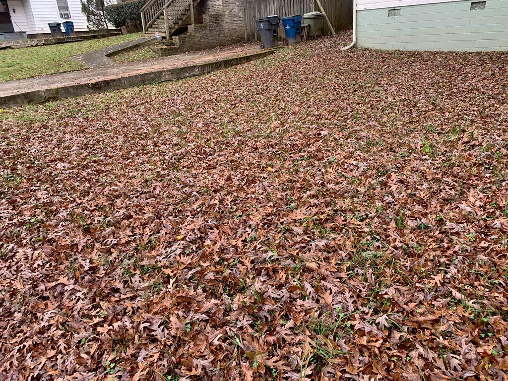 Leaf clean up