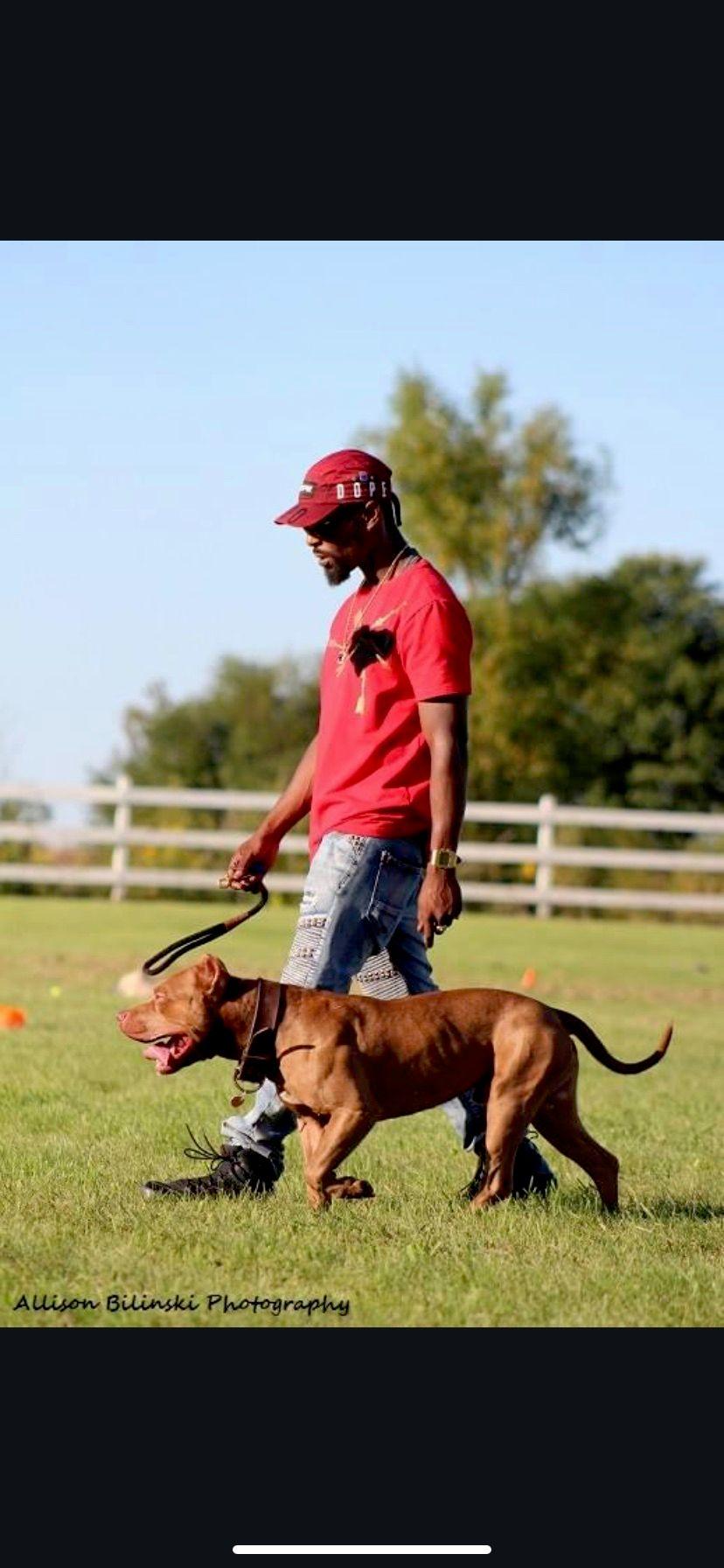 Boss Canine,LLC.