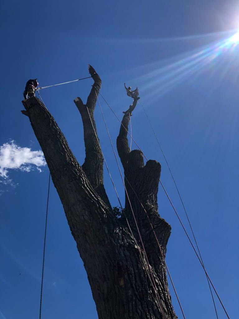 JC Lawncare & Tree Service / Stump Grind