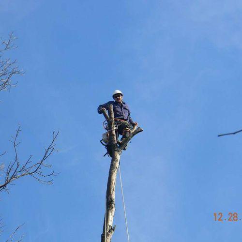 Nashville, TN Tree Service